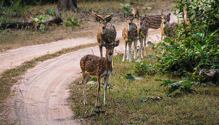pench-india
