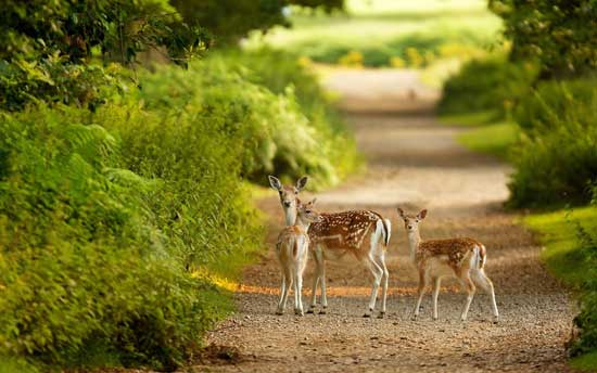 pench-national-park-india