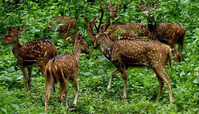 periyar-wildlife-sanctuary