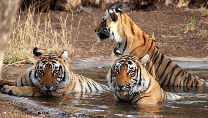 rajasthan-wildlife-tourpackages