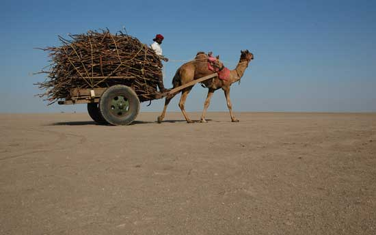 rann-of-kutch-india