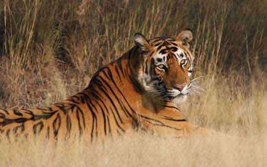 ranthambore-national-park-india