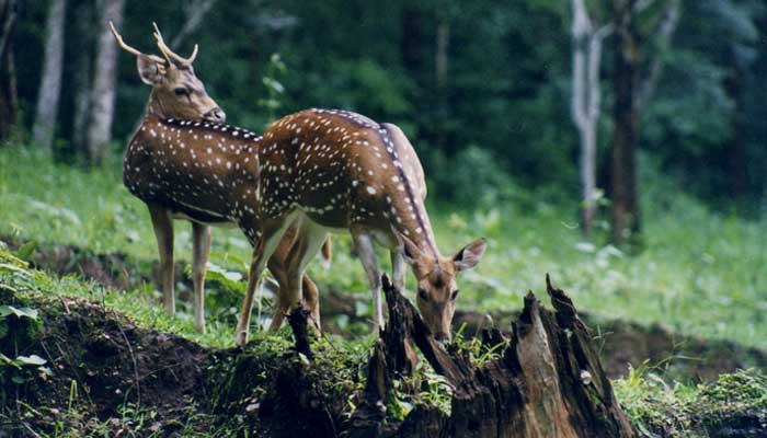 southern-india-nature-and-wildlife