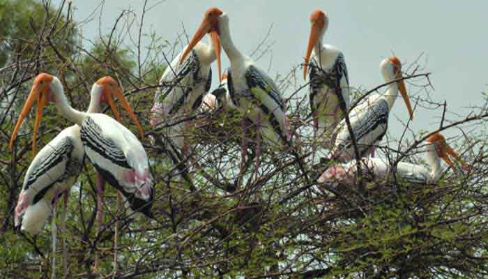 thatekkad-bird-sanctuary-kerala