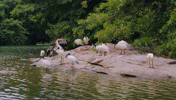 thatekkad-bird-sanctuary