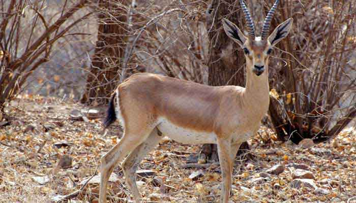 wildlife-of-gujarat